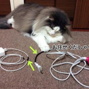 猫のイタズラVS人間の知恵