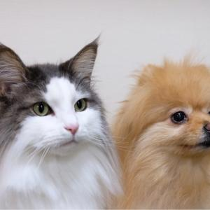 小型犬と大型猫の身長差