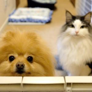 鬼滅の刃最終巻ゲットで犬と猫に謝罪