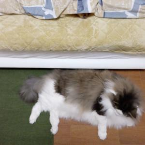 布団に潜って寝る犬の工夫に感心した事