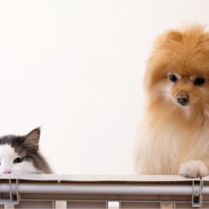 どうやっても犬と猫に見破られてしまう事