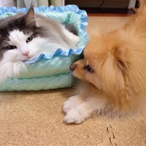 猫への嫉妬が激しい犬