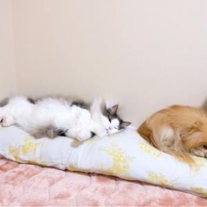 犬と猫と人間の寝床合戦