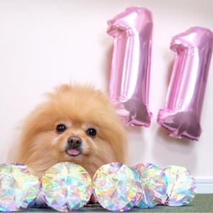 【11歳】HAPPY  BIRTHDAY