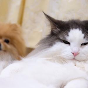 犬猫きょうだいにもある縦社会のルール