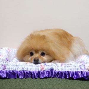 犬と猫がダメになるクールベッド