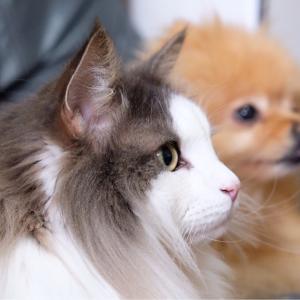 勉強熱心な猫とサボる犬