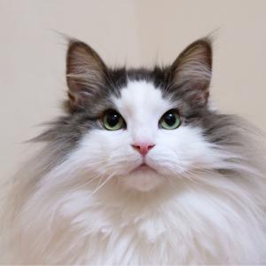 ウチの猫が似ている芸能人とは?