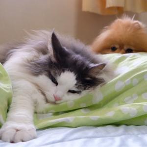 重なり合って寝る犬と猫