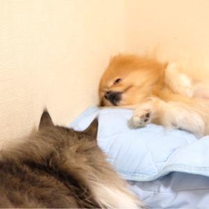 釘付けになった犬の寝相
