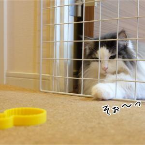 猫に意地悪したら可愛いのが撮れた件