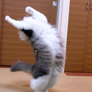 猫が踊り狂ったオモチャ