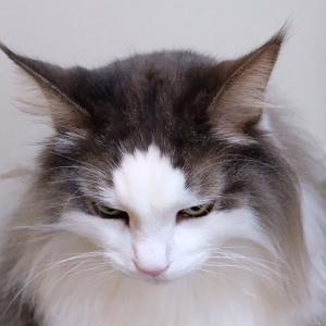 猫が拗ねてる理由