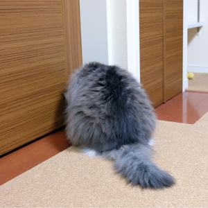 猫の超難しい好み