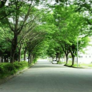 釜石市空き家バンクをリリースしました。空き家情報をぜひご提供ください!