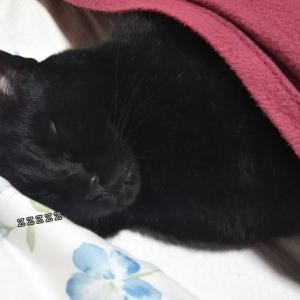 ◆夢見る猫