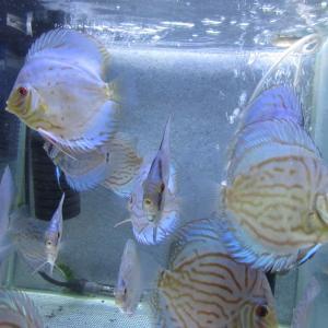 若魚水槽LEDライト少変更
