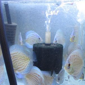 【水槽学】 給水中給餌 & 100均吸水口用スポンジフィルター