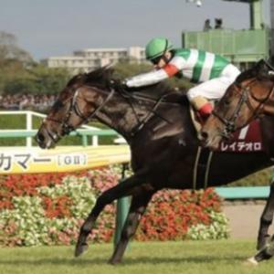 [オールカマー2019]予想オッズ・出走予定馬とデータ予想!ウインブライトは2200mでも大丈夫なのか?レイデオロより強いとは・・・思えない。