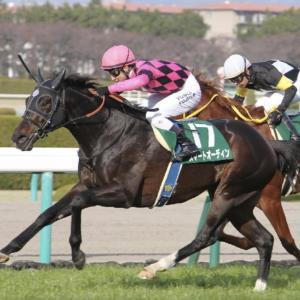 [阪急杯2020]予想オッズ・出走予定馬とデータ予想!1番人気の複勝率は低い。大荒れの展開となるのか?
