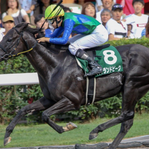 [エルムステークス2020]予想オッズ・出走予定馬とデータ予想!ハイランドピークが狙い目?関東馬ワイドボックスで当たる気がする。