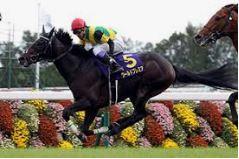 〔菊花賞 2020〕血統予想・出走予定馬/予想オッズ、無敗の3冠馬へ続けコントレイル