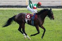 【朝日杯フューチュリティステークス2020】血統全頭診断、今年の血統から狙う馬は?