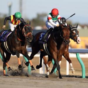 【フェブラリーステークス2021】血統予想展望・今年のメンバーで最も適性の高い血統馬は?