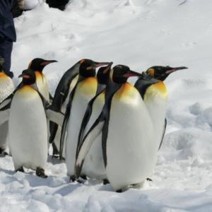 「北極」「南極」って英語で言うと?