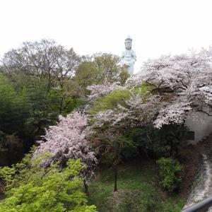 桜の見納めに