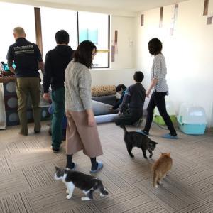 本日開催!ボランティア体験会(=^・^=)