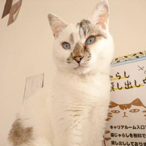 ピコちゃんは ねこの日翌日に 卒業です(=^・^=)