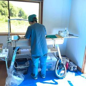 今日は山田で多頭の手術(ブログ担当者はお留守番)