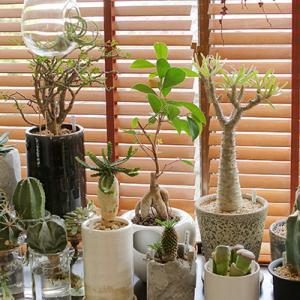 我が家の自慢の植物たち