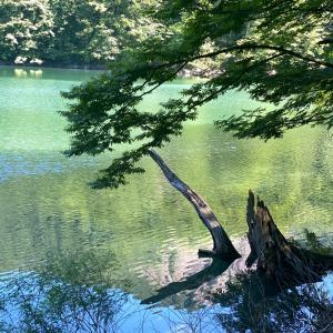 世界自然遺産 白神山地へ 私の夏休み◡̈⃝︎⋆︎*