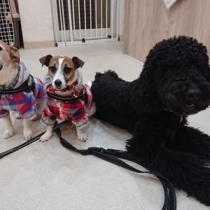 犬旅仲間 駒沢へ
