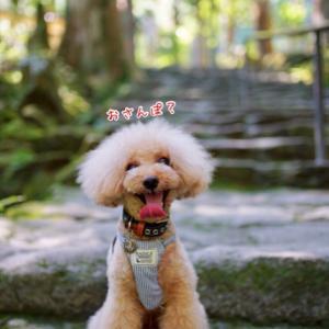 世界遺産『 日本一の滝 』と 流れ星♪