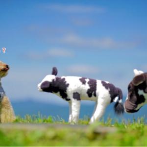 四国カルストで『 出会った 』牛に ムウは・・?