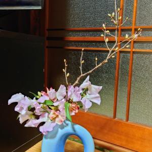 啓翁桜を父の部屋に☆