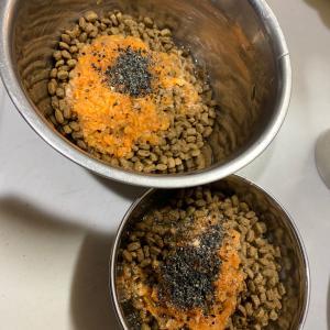 イタグレ今日のワンコスープ