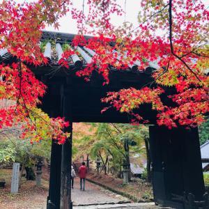 秋月、黒門の色づき