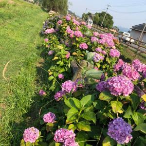 三連水車の横に咲く紫陽花