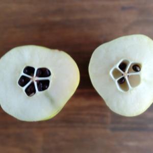 木瓜の蜂蜜漬け