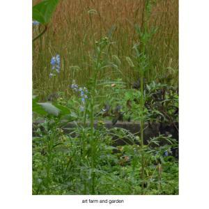 嵐の後は/art farm & gardenの庭