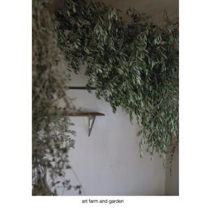 部屋の中のオリーブ/art farm & garden