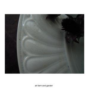 冬のチョコレートコスモス/art farm & garden