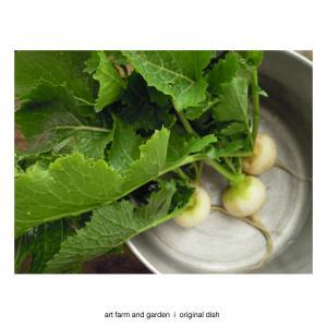 香りのハーブと冬野菜/[アート農場と庭]のアートフード