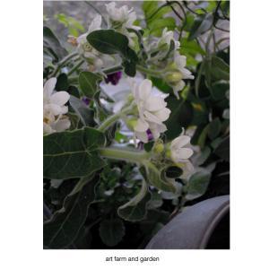 木曜日のコーヒー/art farm & garden