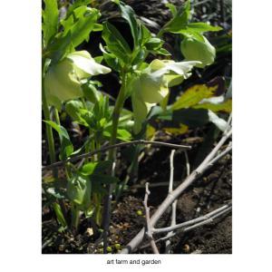 春を告げる花/art farm & gardenの庭
