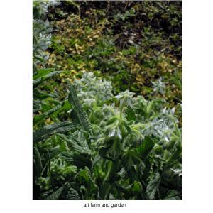 風の庭/art farm & gardenの庭